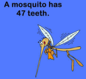 did you know a mosquito has 47 teeth